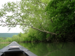 Canoeing the Shenandoah River 2