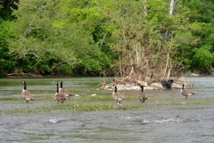 Shenandoah River 4