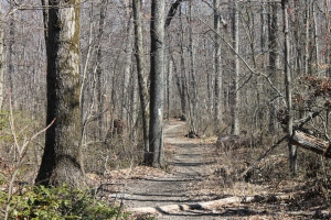 The Appalachian Trail 1