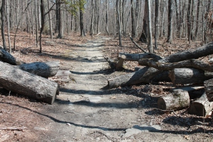 The Appalachian Trail 2