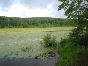 Several acres of Sleepy Creek Lake are overgrown by this time of year making fishing nearly impossible.