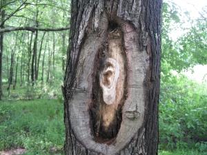 Tree at Sleepy Creek Lake