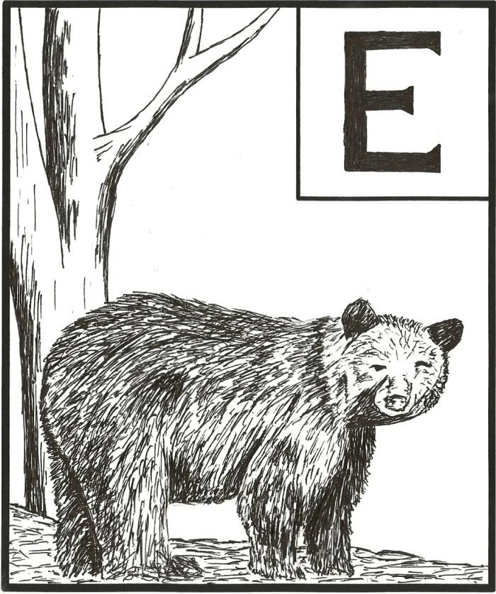 Bear E