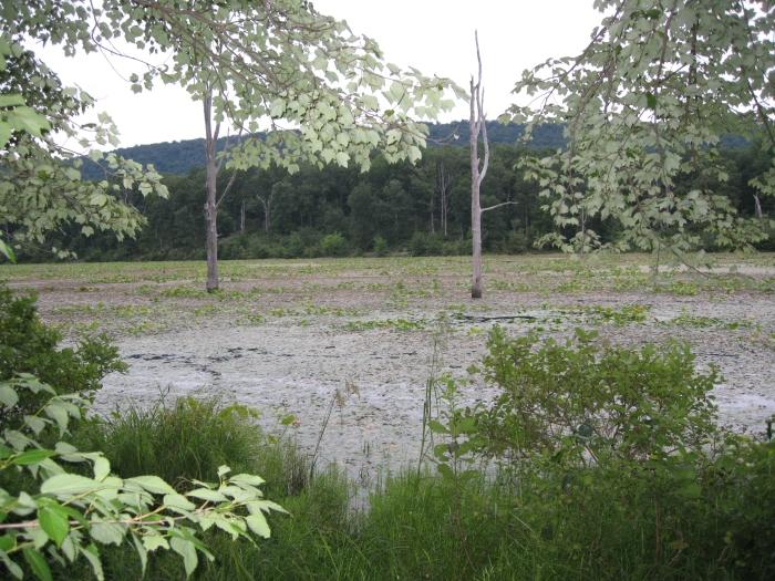 Sleepy Creek Lake 1