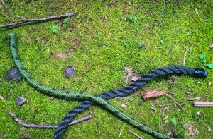 Reef Knot 1